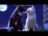 «ЯЯяяяяя» под музыку     [❤]Кошки и коты - Кошачье мяуканье под аккорды гитары. Picrolla