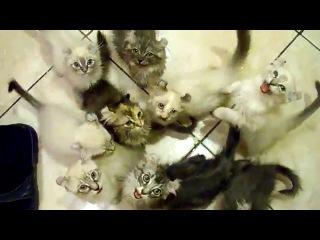 Кошачий апокалипсис!